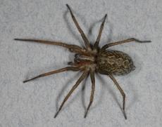 Pest Control Halo Pest Elimination Northern Nevada